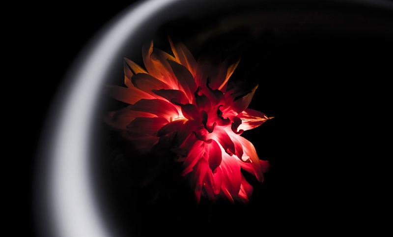 Fiore-Rosso-Simone-Cunego
